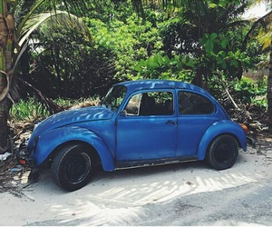 beetle, black, and blue image