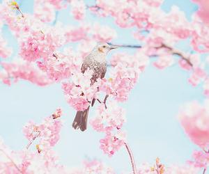 bird, flowers, and pastel image
