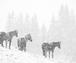 winter, horses, and nature image