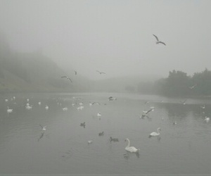 pale, grunge, and fog image