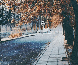 autumn, photography, and nature image