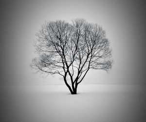 tree, black, and black and white image