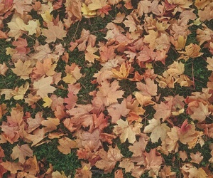 fall and leaves image