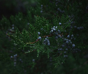 berry, forest, and green image