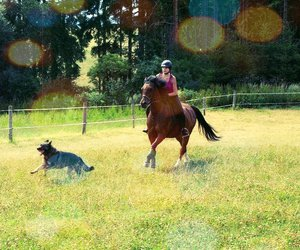 horse and pet image