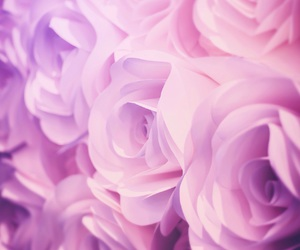 pink, rose, and background image