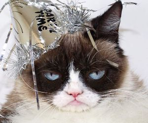 2016, new year, and grumpy cat image