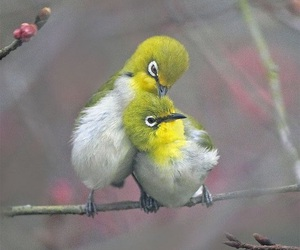 bird, friends, and cuddling image