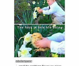 funny, tumblr, and Chicken image