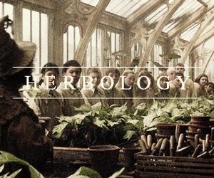 harry potter, hogwarts, and herbology image