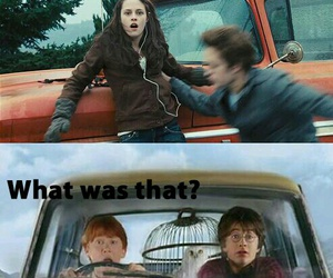 funny, harrypotter, and twilight image