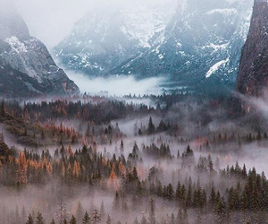 travel, forest, and wanderlust image