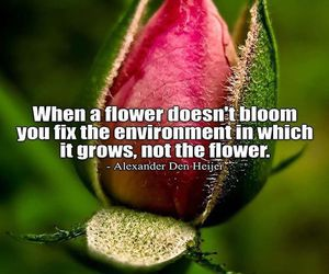 flower, quote, and quotes image