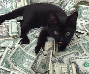 money, cat, and black image