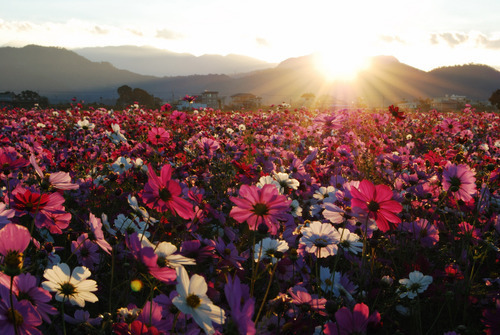 vyer, flowers, and happiness image