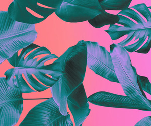 background, pink, and color image