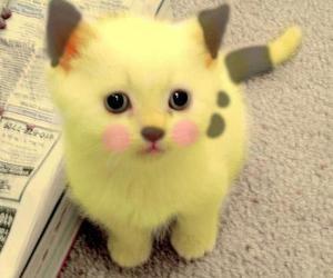 cat, pikachu, and kitten image