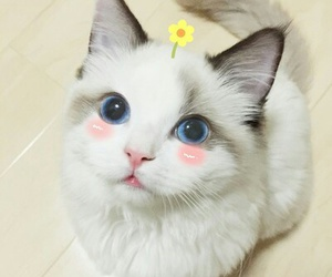 cat, kawaii, and cute image