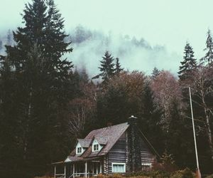 forest, house, and nature image