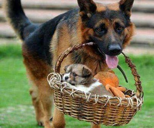 adorable, care, and animals image
