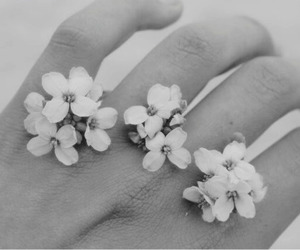 b&w, flowers, and fingers image