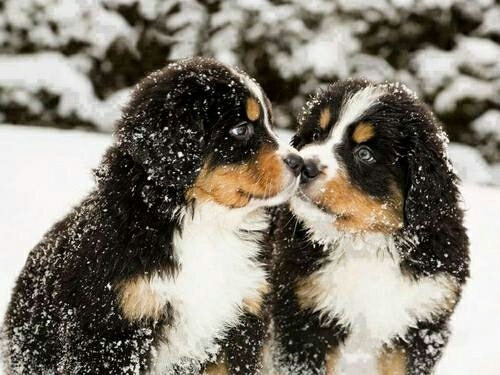 couple, love, and dogs image