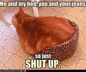 funny, cat, and animals image