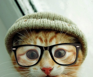 *-*, meow, and ownt image
