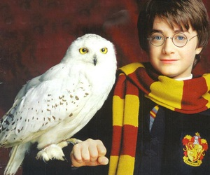 harry potter, hedwig, and gryffindor image