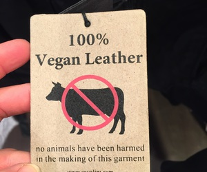 animals, love, and clothing image
