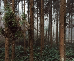 forest, morning, and nature image