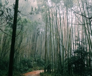 bamboo, forest, and green image