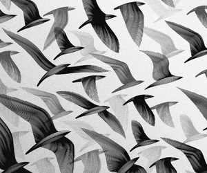 bird, black and white, and wallpaper image