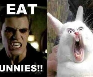 bunny, stefan salvatore, and tvd image