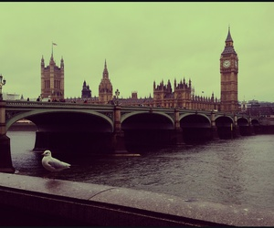 Big Ben, city, and seagull image