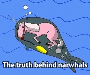 unicorn, narwhal, and funny image