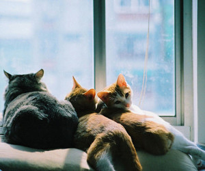 cats, cute, and pretty image