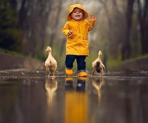 cute, duck, and rain image