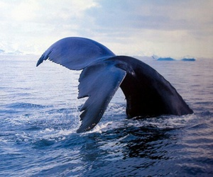animals, ocean, and sea image