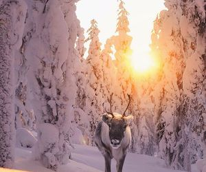 artic, beautiful, and snow image