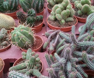 love it, cactus, and cactussen image