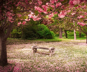 nature, spring, and flowers image