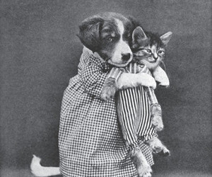 dog, cat, and black and white image