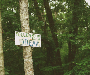 Dream, forest, and follow image