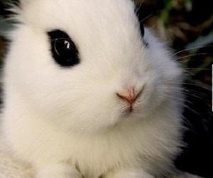 black eyes, white, and cute image
