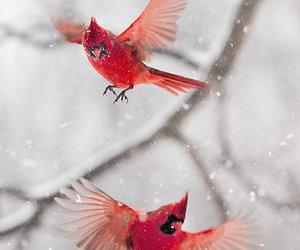 bird, fly, and red image