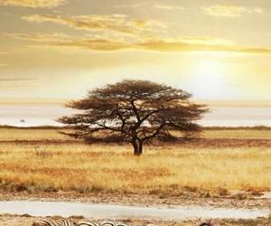 nature, savane, and zèbré image