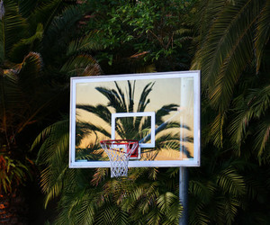 Basketball, summer, and palms image