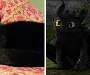 cat, toothless, and dragon image