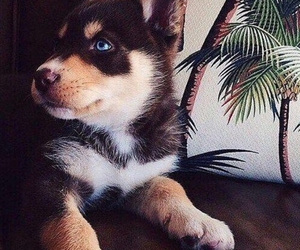 baby, blue eyes, and puppy image